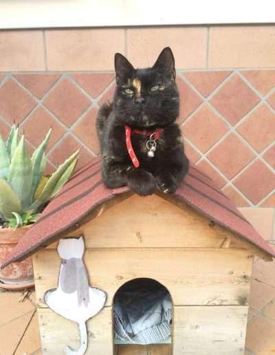 casetta per gatto